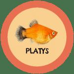 icono peces platys tabla de compatibilidad