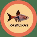 icono peces rasboras tabla de compatibilidad