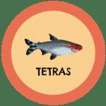 icono peces tetra tabla de compatibilidad